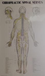 Sinal-nerves-poster