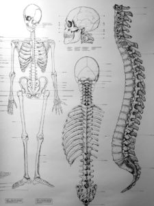 spine-drawing-3